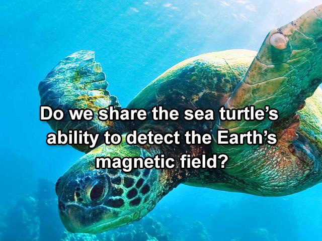 Humans can detect Earth's magnetic field?