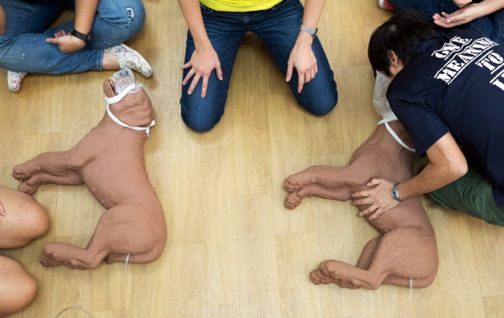 Training CPR on dogs at Dog First Aid. Photo: Dog First Aid