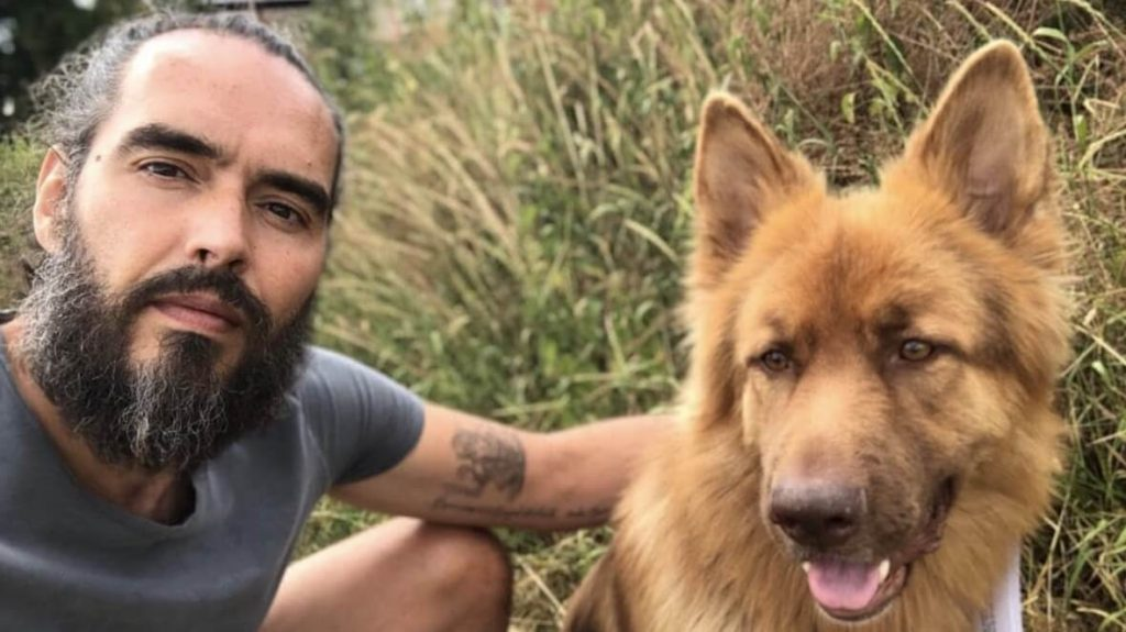 Russell Brand and Bear his German Shepherd dog. Photo in public domain.