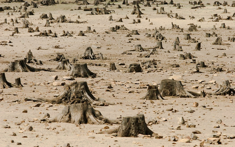 Brutal deforestation in Ethiopia