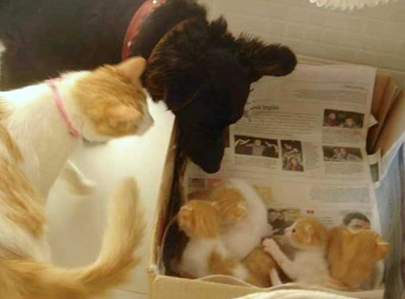 Dog leaves some of his food for pregnant stray cat and becomes the father to her kittens