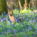 Garston Wood deer