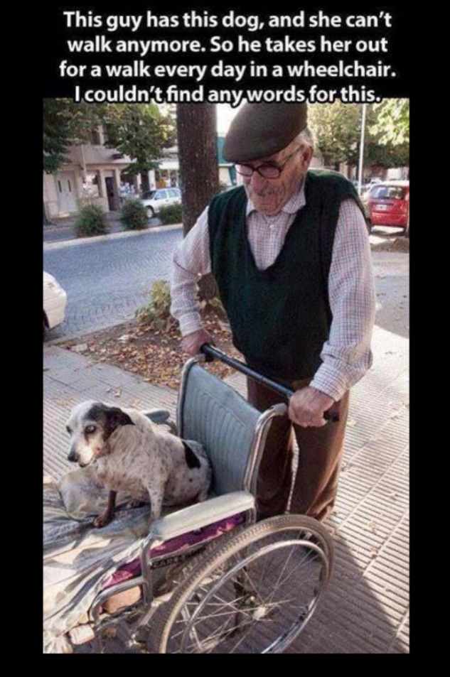 Old man pushes his old dog around in a wheel chair.