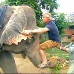 Martin Clunes climbs an elephant's trunk