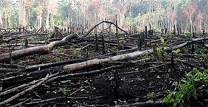 Mexico deforestation - this kills off animals dependent on the forests