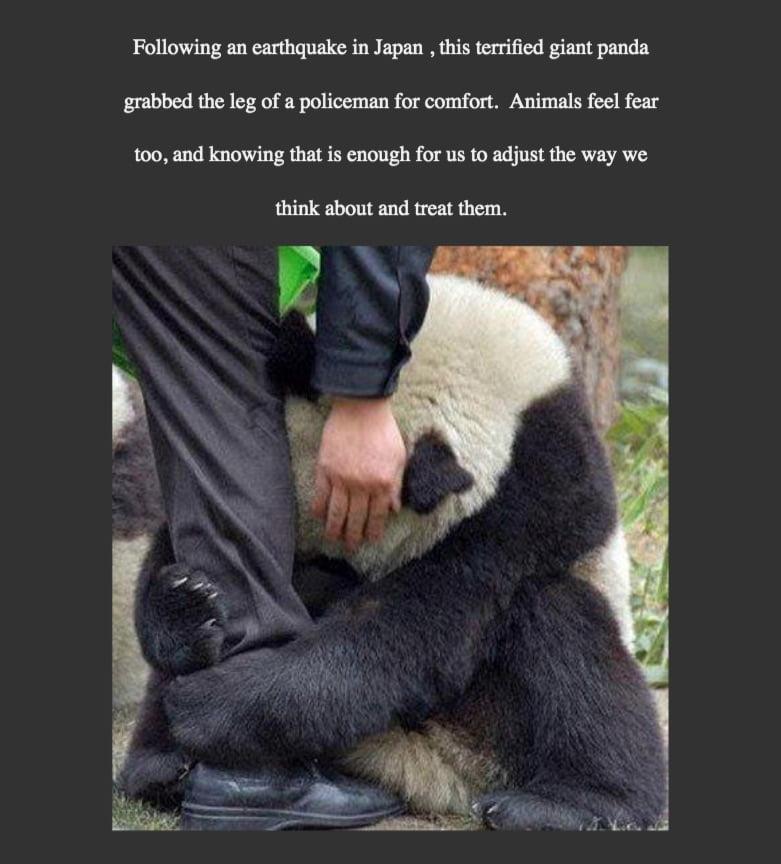 Giant panda scared and he hugs a policeman.