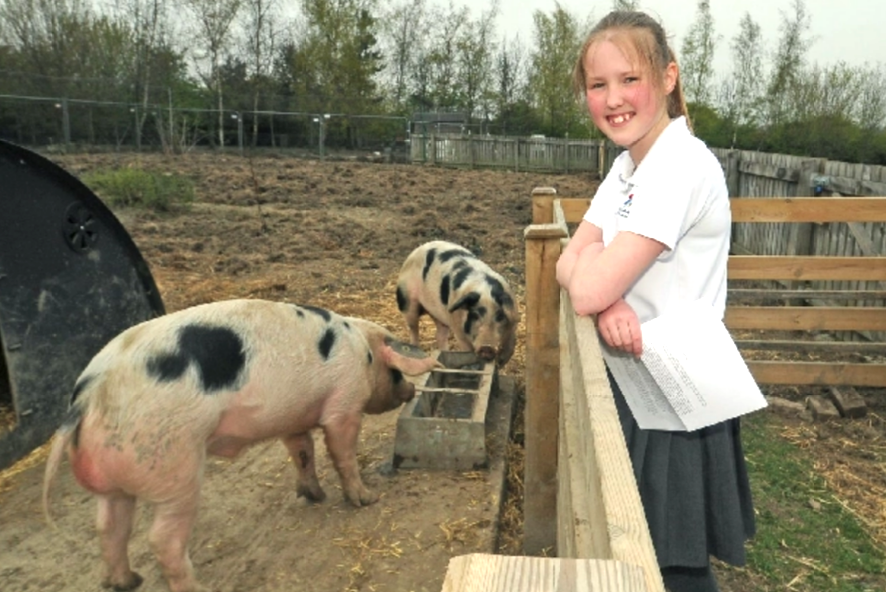 Farsley Farfield Primary School pupil Charlotte Heap says everybody there understands the pigs are destined for slaughter.