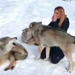 Woman howls with wolves