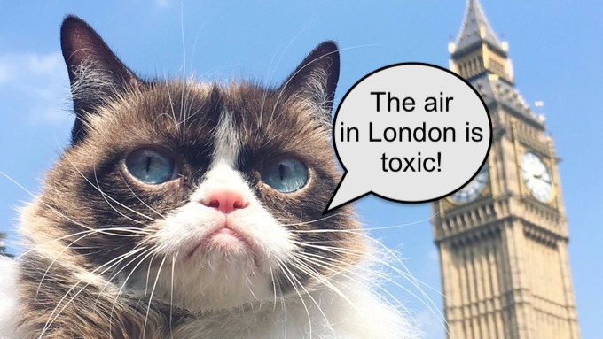 London's air pollution harms our companion animals as well as their human guardians.