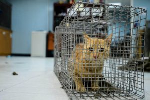 Cat - TNR at army base Korea