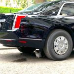 Larry the cat under President Trump's car