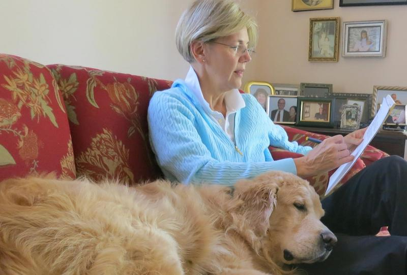 "Elizabeth Warren prepares for her debate with Sen. Scott Brown with her dog ""Otis"" (2013). Photo in public domain."