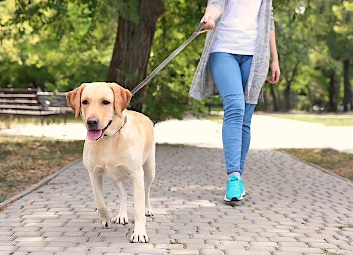 Holding a dog lead correctly. Photo in public domain/fair use.
