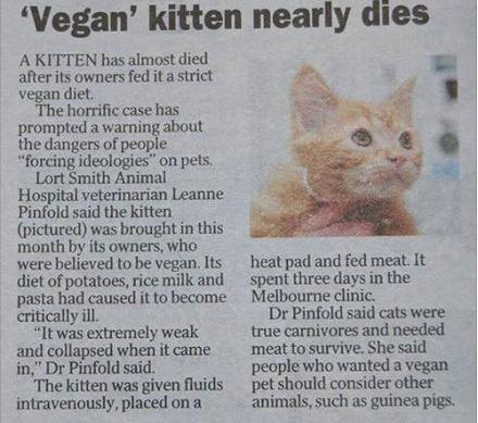 Vegan kitten nearly dies