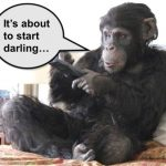 Chimp with TV remote control