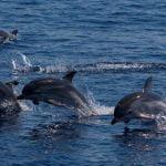 Tuscany's dolphins