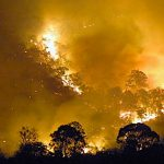 Australian bushfires New South Wales