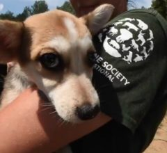 South Korean dogs saved from dog meat market