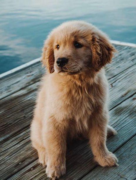 Beautiful young dog.