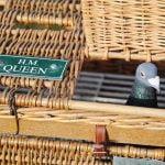 Queen's pigeons