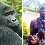 Rafiki and one of the poachers who killed him with a spear