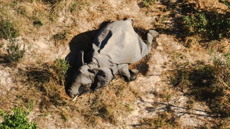 The elephant in Botswana stricken by an unknown pathogen possibly one which is zoonotic. Tests are being carried out. There are fears that it could be the beginnings of another pandemic