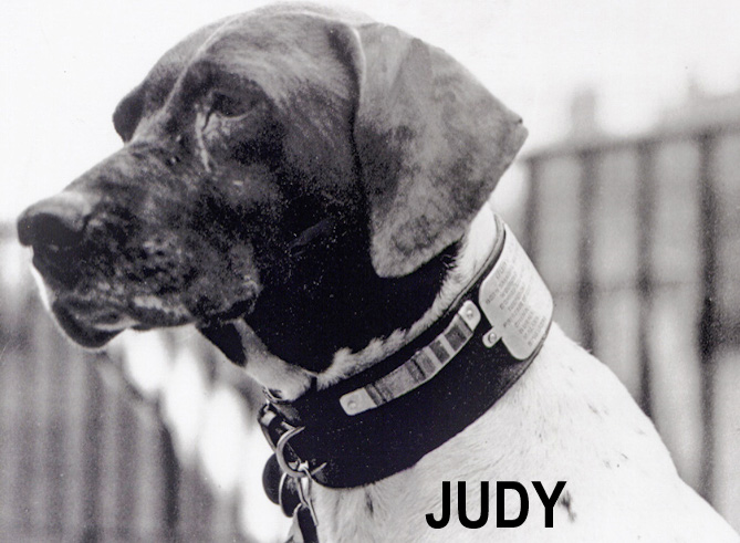 Judy, an English pointer who served in the Second World War and was taken as a prisoner by the Japanese. She was awarded the animal equivalent of the Victoria Cross for her service to the country.