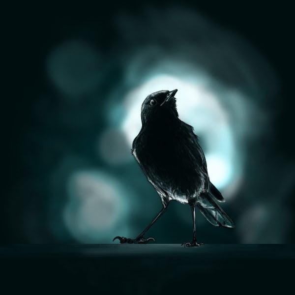 Nightingale at night