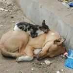 Sad tender picture of street cat sleeping on street dog
