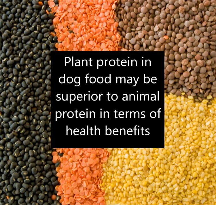 Dog food containg plant protein