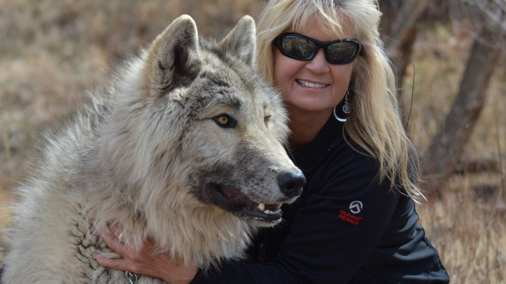 Peggy Jehly has been working with wolves and wolf dogs for a number of years