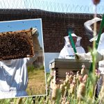 Bee keeping at Warren Hill prison