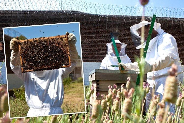 Bee keeping at Warren Hill prison