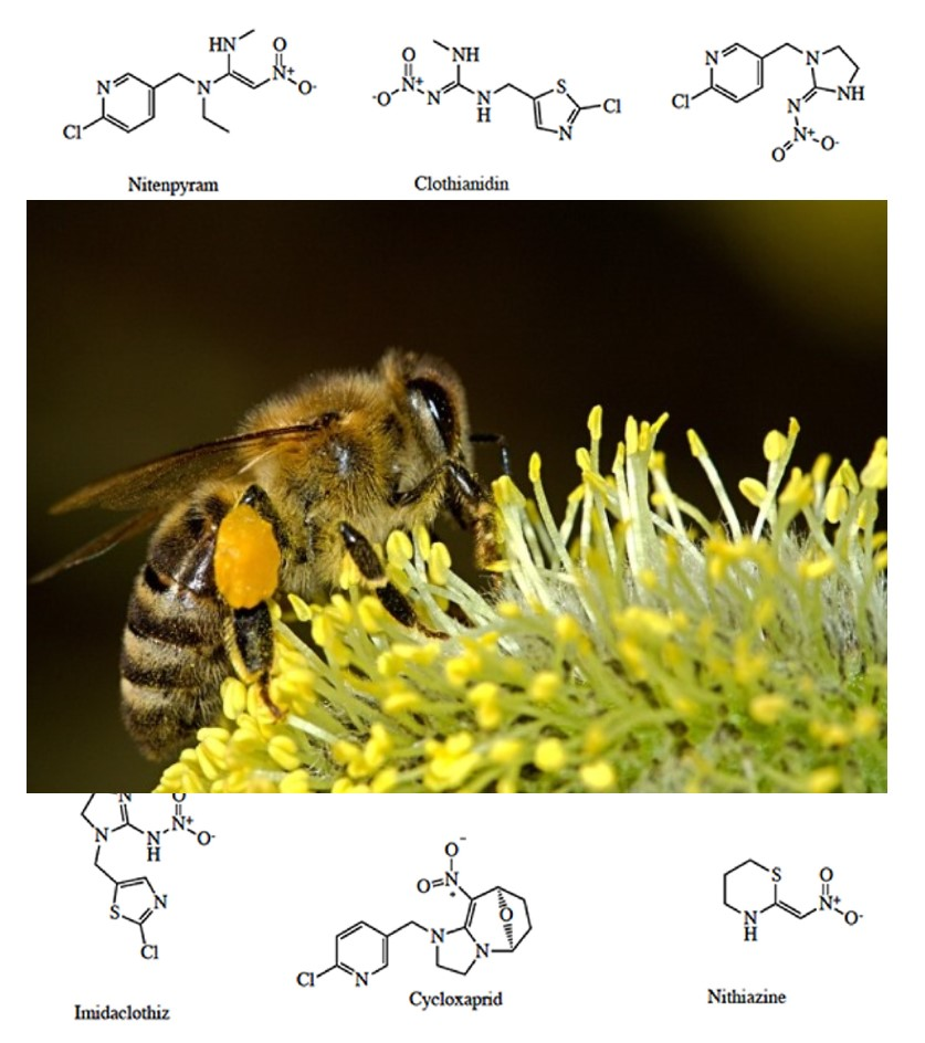 Bees poisoned by pesticides