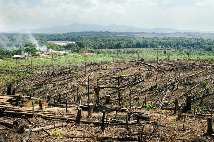 Burning rainforest in Sumatra to make way for palm oil plantations