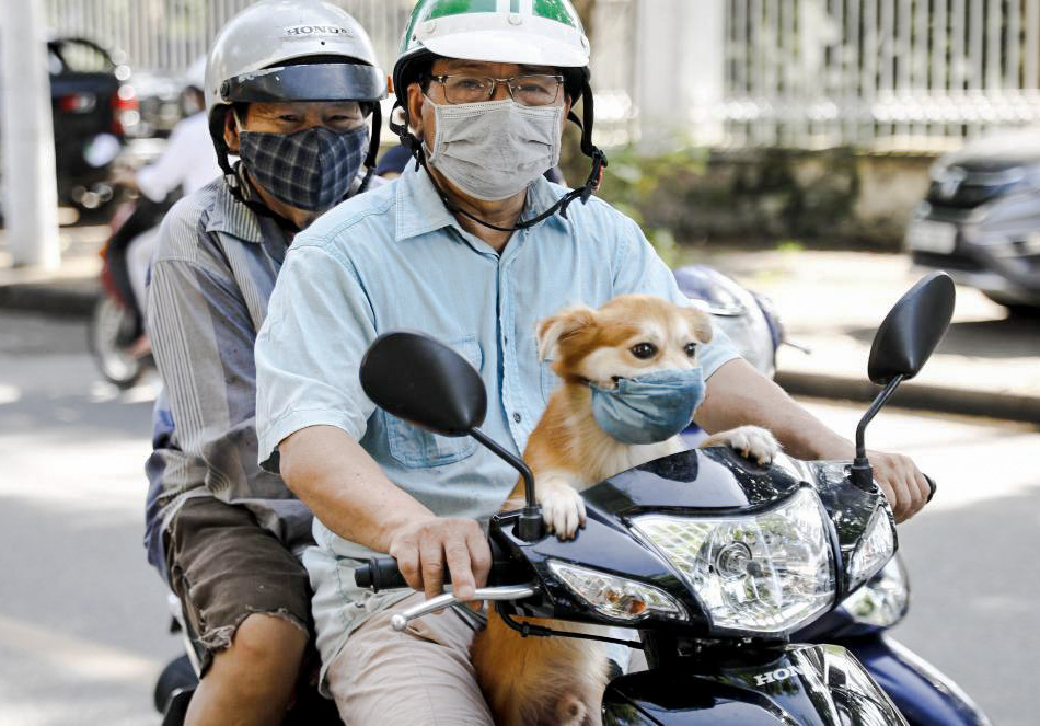 Dog with coronavirus mask in motor cycle in Vietnam