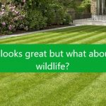 Artificial grass is bad for nature and the environment