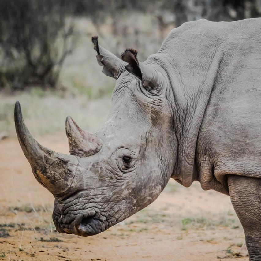 Rhino SA