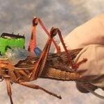 Locust rigged with transmission deLocust rigged with transmission devicevice
