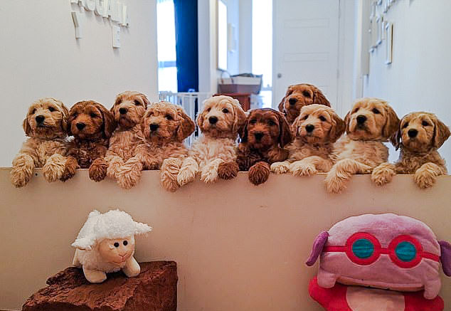 $100k of dog?