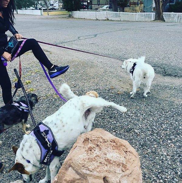 Dog cocks a leg