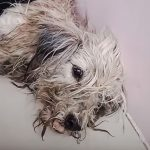 Soi dog rescue Thailand