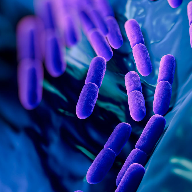 Plastic munching enzymes from a bacterium