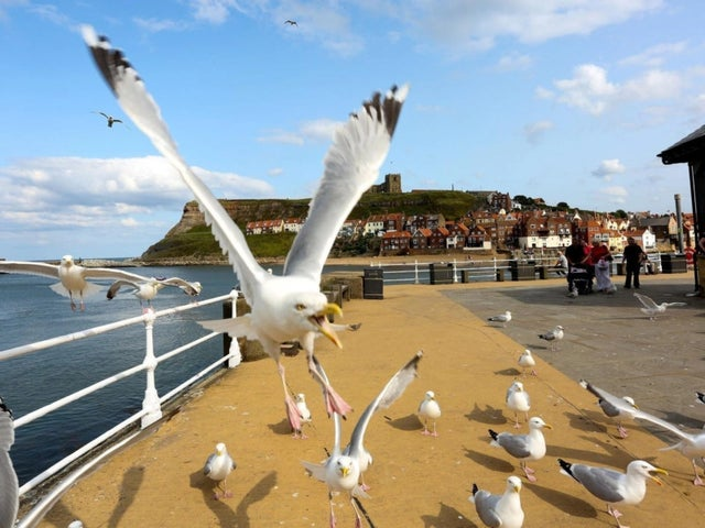 Seagulls at Whitby