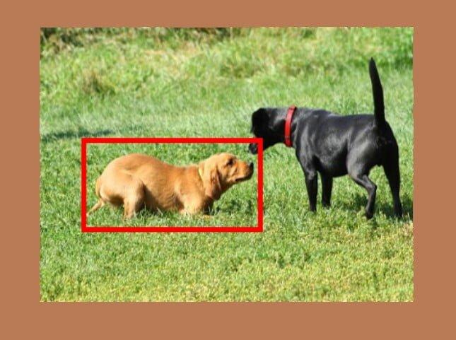 Submissive dog body language