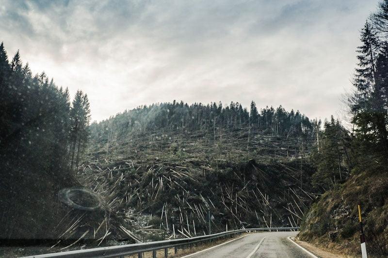 Deforestation - habitat loss