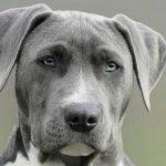 Remorseful dog?
