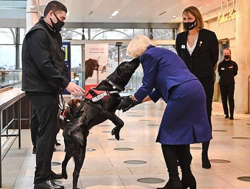 Coronavirus sniffer dog meets the duchess