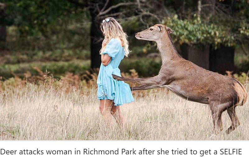 Deer attacks young woman in Richmond Park while she takes a selfie
