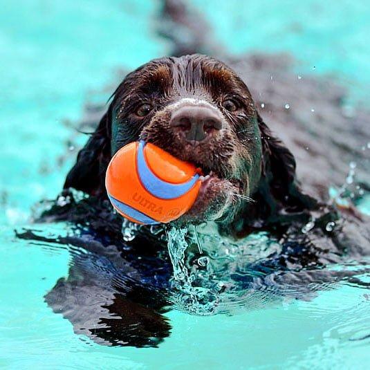 Sandford Parks Lido dog swim event